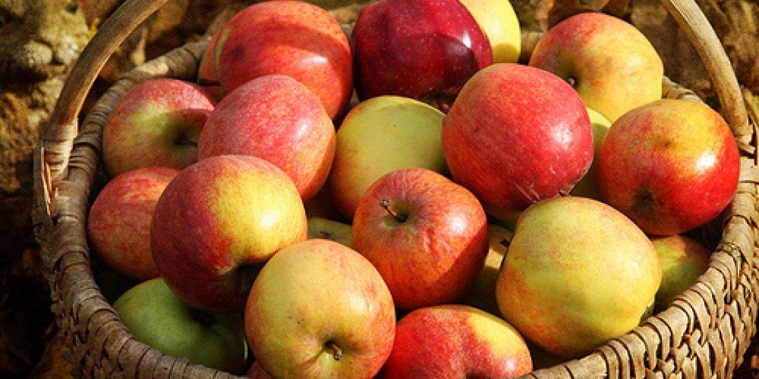 Ένα μήλο το πρωί … ξύπνιο μπορεί να σε κρατεί!! - Κεντρική Εικόνα